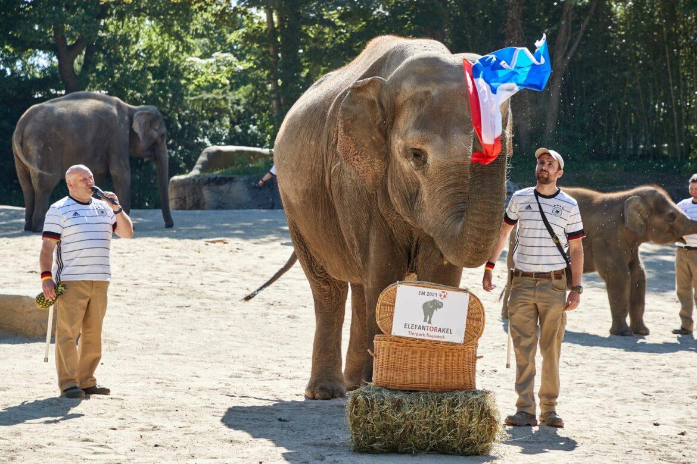 Elefanten-Orakel tippt auf Frankreich-Sieg gegen Deutschland