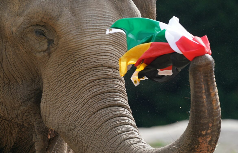 Deutschland gegen Ungarn: Elefanten-Orakel prophezeit Remis