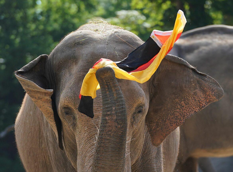 Elefantin Yashoda sieht DFB-Sieg gegen England voraus